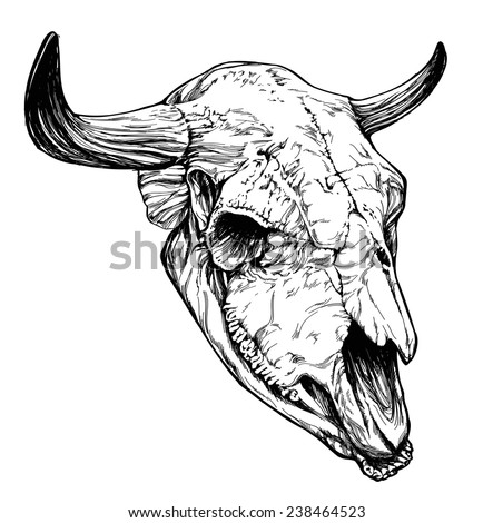 Bull / aurochs skull with horns on white background - stock vector