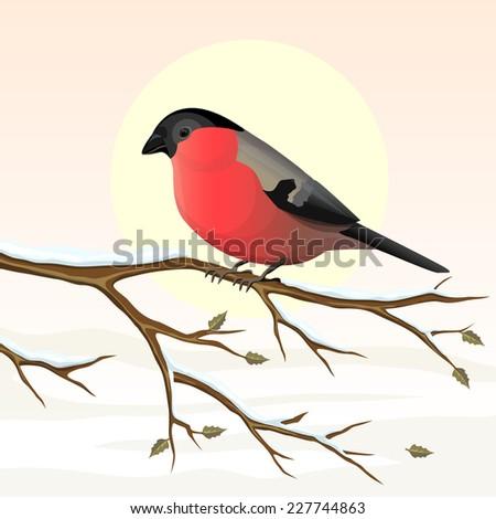 Bullfinch on a branch. Vector illustration. - stock vector
