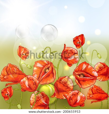 Bunch of Beautiful Red Poppy Shiny background with Lights.   Invitation Floral Card Design with Poppy.  - stock vector