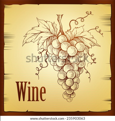 Bunch of grapes.  Wine lable - stock vector