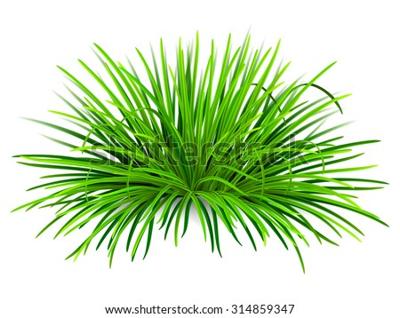 Bunch of green grass. Vector, isolated on white background.  - stock vector
