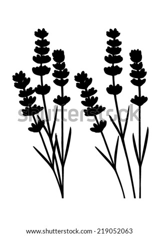 Bunch of lavender flowers and lavender flowers separated - black silhouette - vector  - stock vector