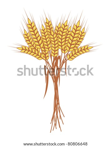 bunch of ripe wheat ears with red ribbon, vector - stock vector