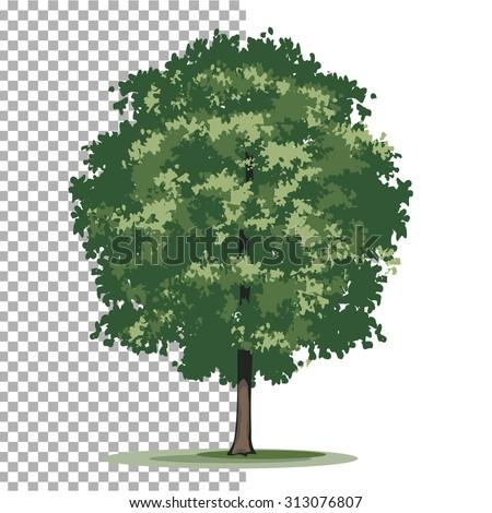 Bur oak tree. Isolated vector illustration of tree on transparent background. - stock vector