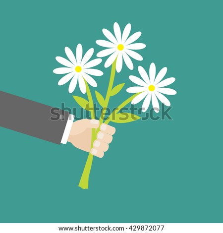 Businessman hand holding bunch bouquet of white daisy flowers. Greeting card.  Green background. Flat material design. Vector illustration - stock vector