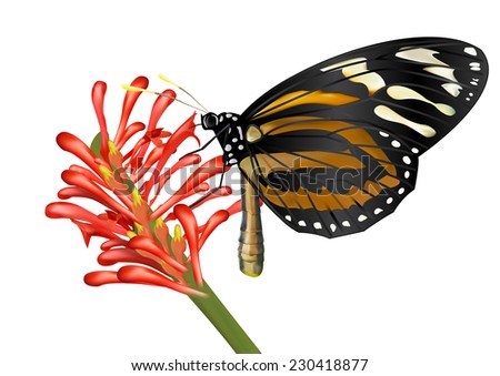 Butterfly and flower - vector - stock vector