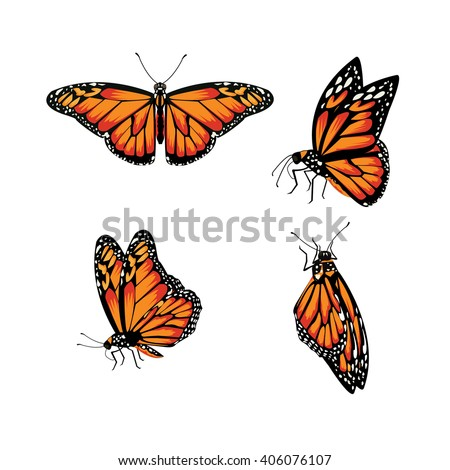 butterfly  Monarch Butterfly, Danaus plexippus - stock vector