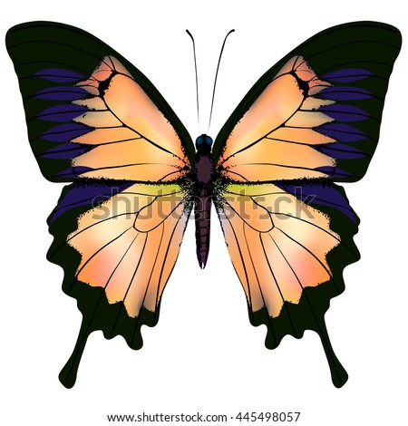 Butterfly. Orange and yellow butterfly isolated illustration on white background. Nonexistent butterfly zoology specimen - stock vector
