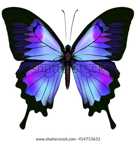 Butterfly. Vector illustration of beautiful pink blue lilac and purple butterfly isolated on white background - stock vector