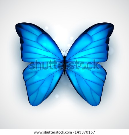 Butterfly with big blue wings on white background. EPS10 vector. - stock vector