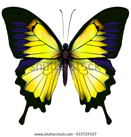 Butterfly. Yellow butterfly isolated vector illustration on white background. Nonexistent butterfly zoology specimen - stock vector