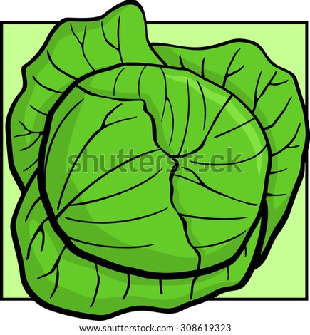 cabbage - stock vector