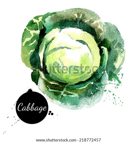 Cabbage. Hand drawn watercolor painting on white background. Vector illustration - stock vector