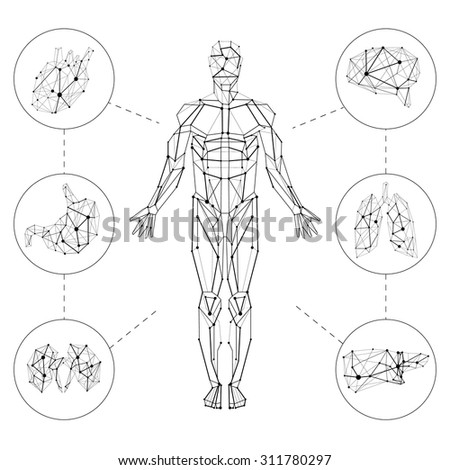 Carcass polygonal geometric lines Human with internal organs set composition on white background - stock vector