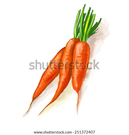 carrots vector illustration  hand drawn  painted watercolor  - stock vector