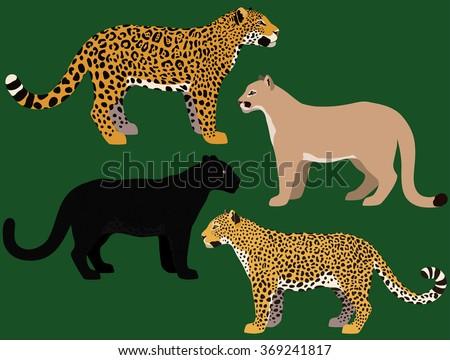 Cartoon big cats vector set. Illustration of black panther, cougar, jaguar, leopard. - stock vector