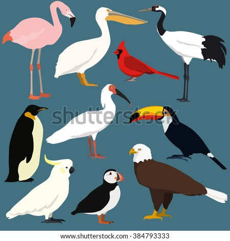 Cartoon birds collection. Different species of birds vector set. Crested ibis, japanese red crowned crane, cockatoo parrot,pelican,toucan,puffin,flamingo,penguin,bald eagle, red northern cardinal.  - stock vector