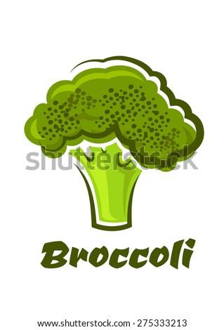 Cartoon fresh green healthy broccoli vegetable with text  Broccoli below for a healthy vegetable or vegetarian diet - stock vector