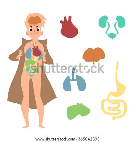 Cartoon male figure with the internal organs vector illustration - stock vector