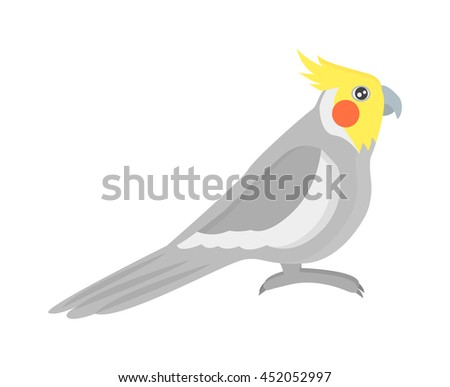 Cartoon parrots bird and parrot wild animal bird. Tropical parrot feather zoo birds tropical fauna macaw flying ara. Various cartoon exotic bird with parrots illustration vector - stock vector