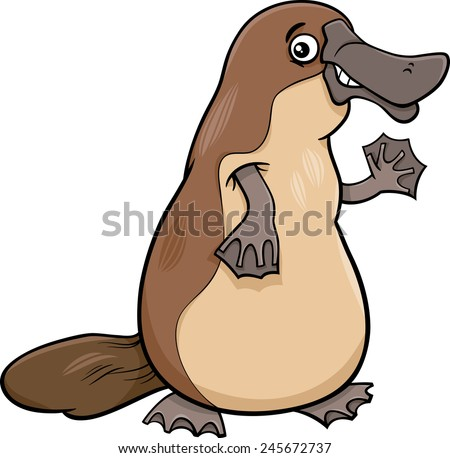 Platypus Stock Photos, Images, & Pictures | Shutterstock