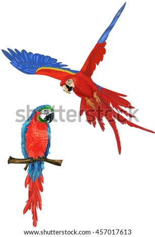 Cartoon vector illustration of two red and blue parrots ara macaw  isolated on white background - stock vector