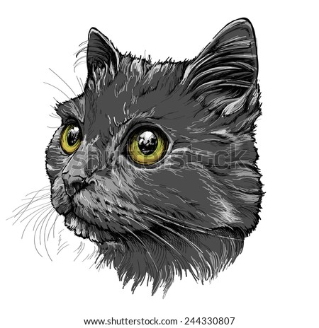 Cat portrait. Hand drawn illustration - stock vector