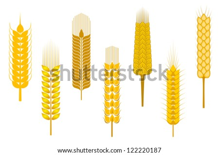 Cereal ears set isolated on white background for agriculture design, such a logo template. Jpeg version also available in gallery - stock vector