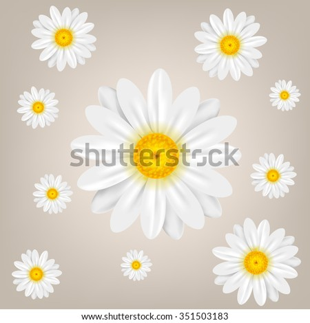 Chamomile. Background with isolated chamomiles. Vector illustration. - stock vector