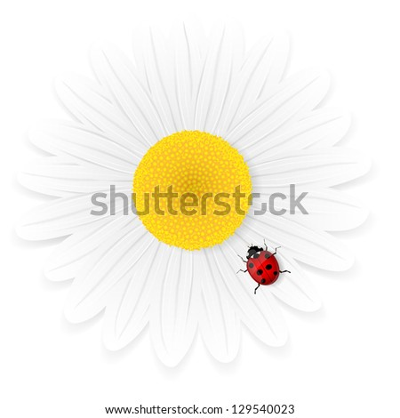 Chamomile flower and ladybird isolated on white background. Vector illustration. - stock vector