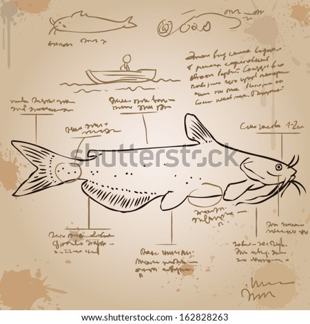 Channel catfish. Vintage picture with explanations in an unknown language. Old paper, ink stains. - stock vector