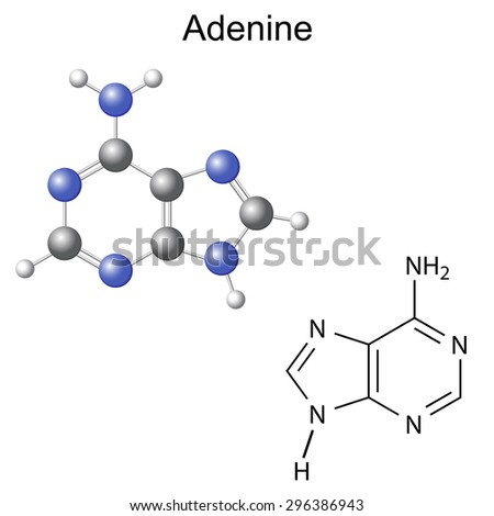Chemical structural formula and model of adenine - DNA and RNA nitrogen base, 2d and 3d illustration, isolated on white background, vector, eps 8 - stock vector