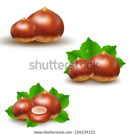 Chestnuts Big Set With Gradient Mesh, Vector Illustration - stock vector