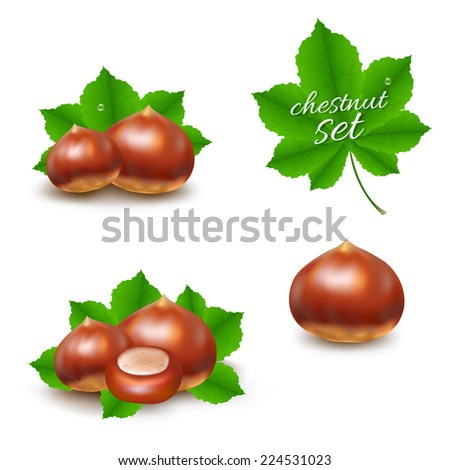 Chestnuts Set With Gradient Mesh, Vector Illustration - stock vector