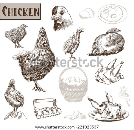 chicken breeding. collection of vector designs on a gray background - stock vector