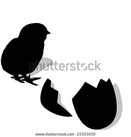 Chicken hatching. silhouette - stock vector