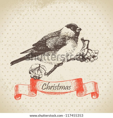 Christmas bullfinch and ashberry. Hand drawn illustration - stock vector