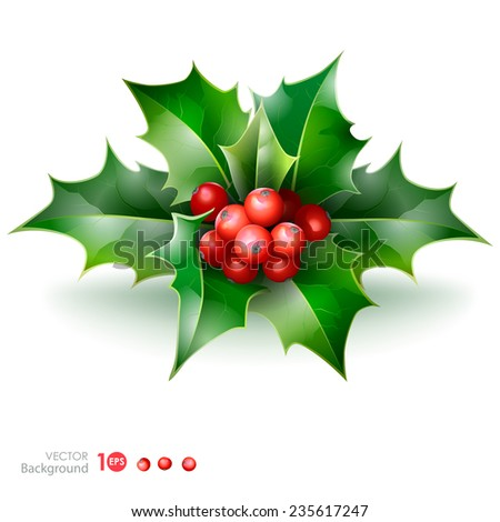 Christmas holly with berries. Vector  EPS 10. - stock vector
