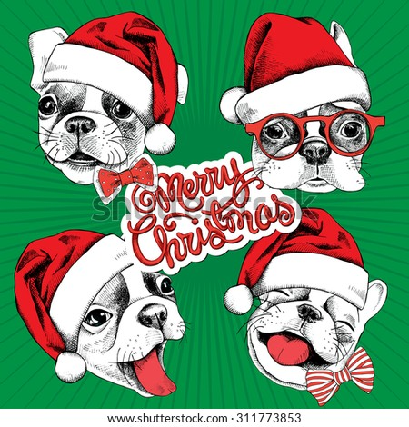Christmas set. Portrait of cheerful French bulldog in a Santa hat with a bow. Vector illustration. - stock vector