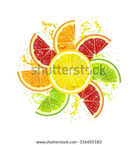 citrus fruits laid out in the form of a flower - stock vector