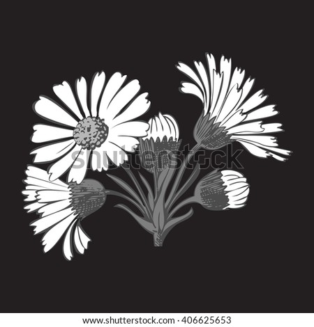 Close-up isolated blooming floral white spring eco monochrome flower organic line leaf vector botanical curve symbol botanic summer pen drawing paint black daisy chamomile ink illustration flora stem - stock vector