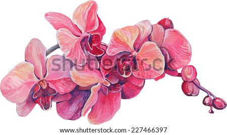 close-up of pink orchid flowers on a branch in blossom - stock vector