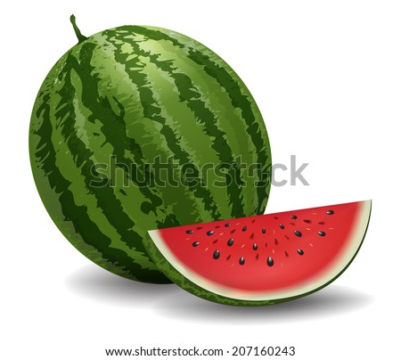Closeup of watermelon (whole and slice) on white background. vector Illustration - stock vector