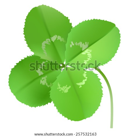 Clover. Hand drawn vector illustration of a four leaf clover on white background  - stock vector