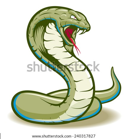 Cobra Snake curled and ready to strike showing fangs and tongue - stock vector