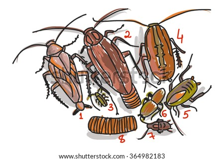Cockroaches and maggots - stock vector