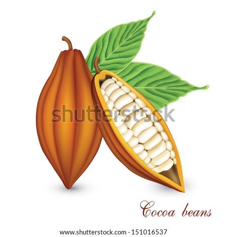 Cocoa beans vector. - stock vector