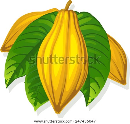 cocoa pod and leaf -  vector illustration - stock vector