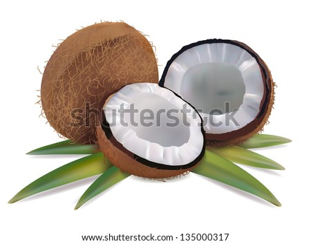 Coconut with leaves on a white background vector - stock vector