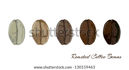 Coffee beans showing various stage of roasting from the green bean through to a dark roast. EPS10 vector format - stock vector